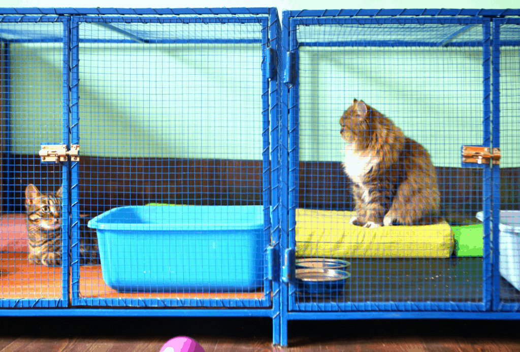 The cat shelter is not a great place for an orphaned kitten